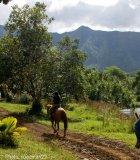 Kauai horseback rider