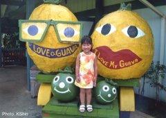 Guava Kai Plantation